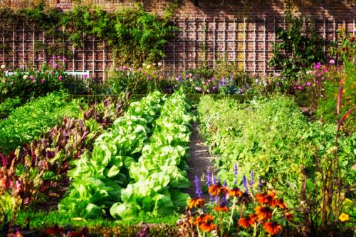 Unkrautschutzfolie Beispielbild Gemüsegarten